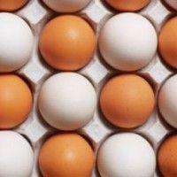 Факторы, влияющие на яичную продуктивность