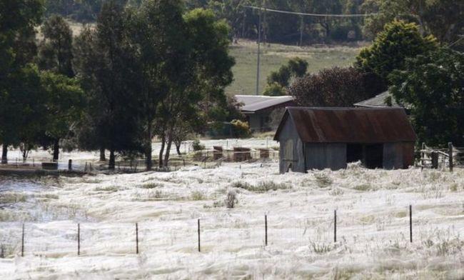 Fenomen anđela kose: pauci zahvatio zgradu i polje deke iz web