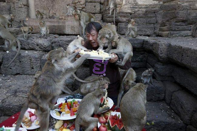 Ošetřování opic.