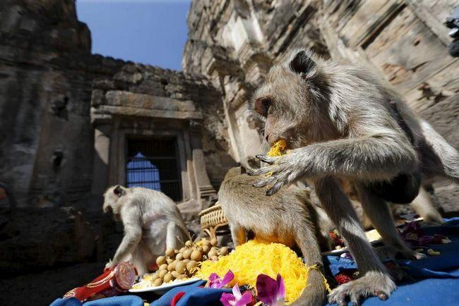 Roční Thai Festival opice.