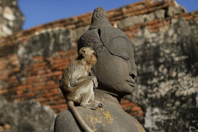 Monkeys - symbol Thajska.