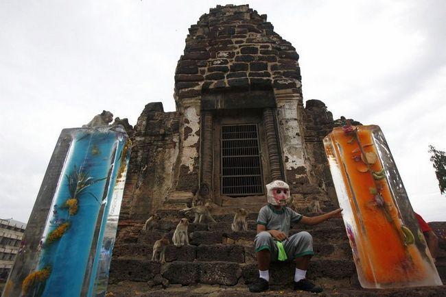 Festival `Monkey bufet` u Tajlandu