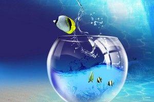 Фильтрация воды в аквариуме: методы очистки