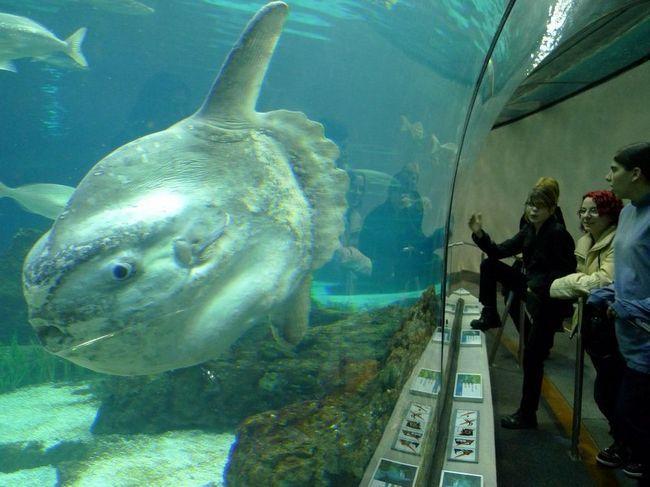 Fotografije Meseca ribe, stvorena u akvariju.