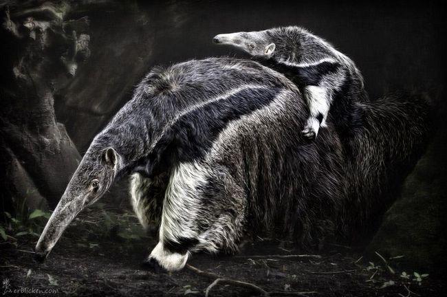 Fotograf životinja slikar Manuela Kulpa