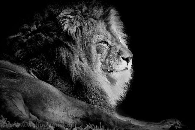 Fotograf životinja slikar Wolf Ademeit