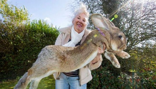Fotografie největšího králíka na světě vybouchl internet