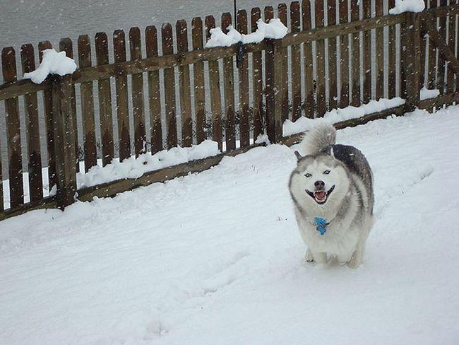 Životinja slike, koji se prvi put vidjela snijeg