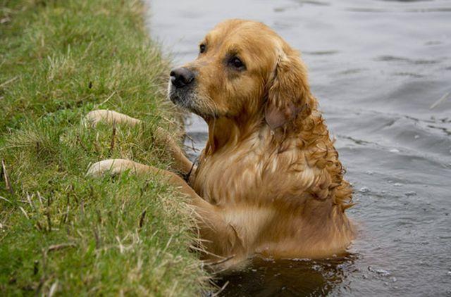 Pas jednostavno voli plivati
