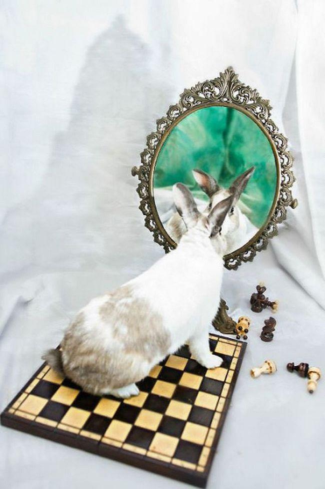 Фотопроект по мотивам сказки Алиса в стране чудес