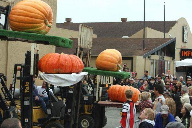 Четыре большие тыкв выставлены на конкурсе красоты на Конкурсе на самую большую тыкву в Хаф Мун Бей 12 октября 2009 года. (UPI/Terry Schmitt)