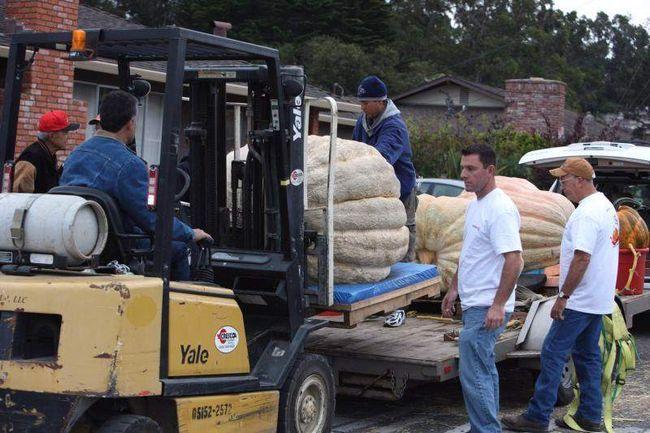 Рабочие передвигают гигантские тыквы для взвешивания. (UPI/Terry Schmitt)