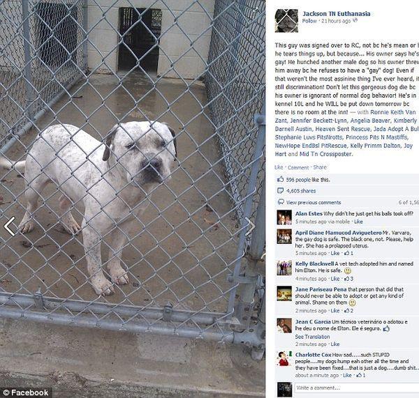 Pas, nazvan Elton, izbegao smrt u skloništu zbog branitelji životinja (Foto: facebook)