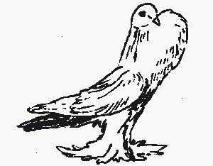 Galícijskej strieborné holubica