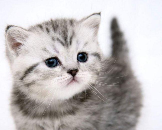Mačići često daju u dobrim rukama.