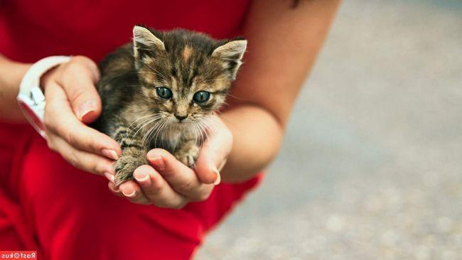 Možete donijeti mačića u kuću sa ulice, ali morate biti svjesni opasnosti od infekcije, pogotovo ako porodica ima malu djecu.