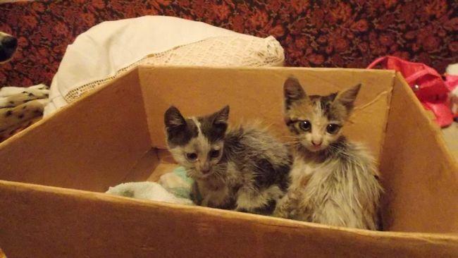 Mačići se prodaje na tržištu, ali ovo je pravi