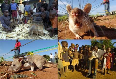 HeroRAT отмечает, что удаление всех мин, оставленных где-либо на Земле после военных конфликтов, в случае традиционных методов обнаружения потребует 500 лет работ. И Африка тут – один из самых проблемных регионов мира, потому именно сюда направили свои стопы Уитдженс и его единомышленники
