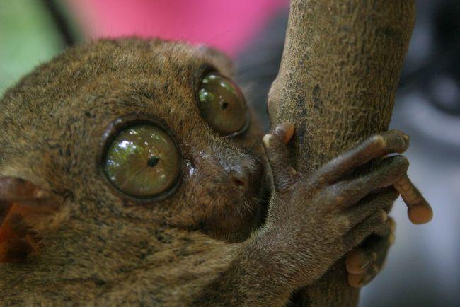 У кого самые большие глаза