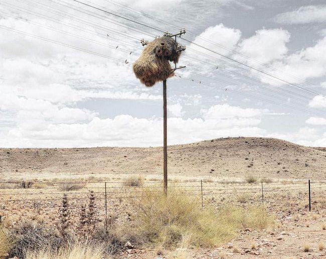 Ovi stubovi Kalahari Desert - uobičajena pojava.