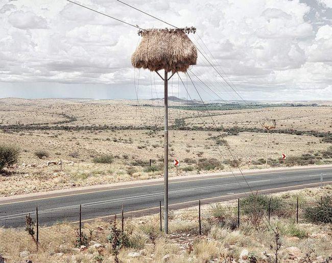 Finch gnijezdo u južnoafričkom Kalahari pustinje: je nadrealizam u pernatih arhitekata.