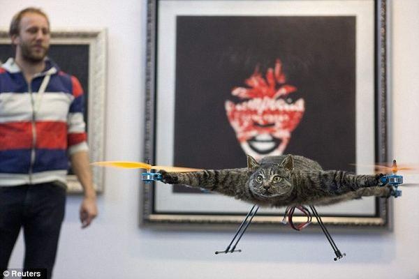 Holanđanin je stvorio neobičan umjetnički projekt u znak sjećanja na mrtve mačke