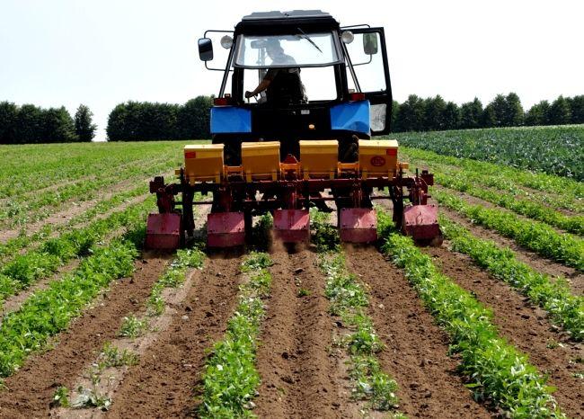Výsadbe zemiakov na holandskom technológie