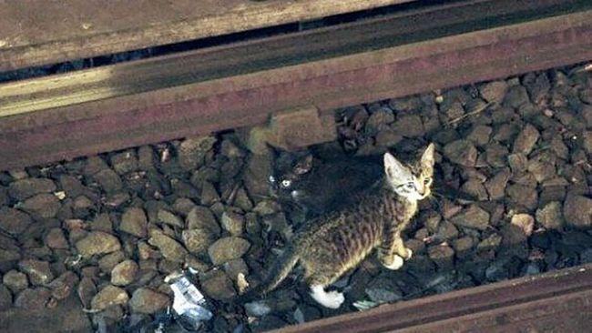 Mače zaustavio vlak.