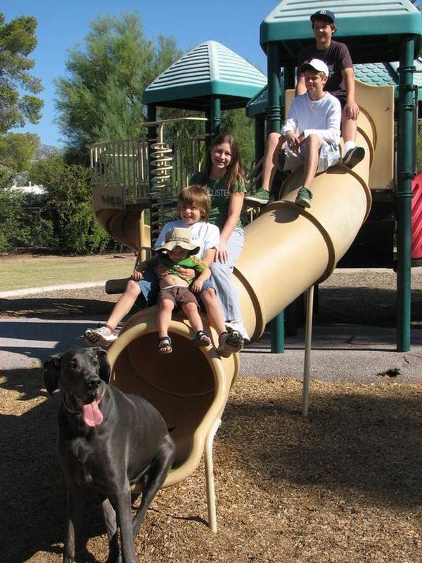 Plavi pas po imenu George (George) - najveći pas na svijetu