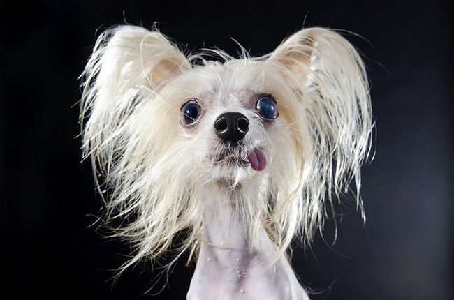 Gole slike psa Sophie Gamand (Sophie Gaming)