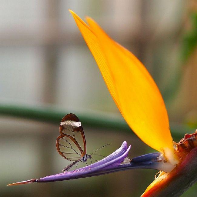 Připevnění k jednomu druhu rostliny dělá tie více závislé na ekologické oblasti pohoda, kde tyto rostliny rostou.