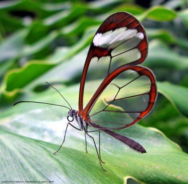 Sklo motýl - čistota přirozené světlo.