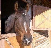 Грипп лошадей