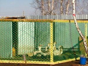 Гусятник — помещение для гусей