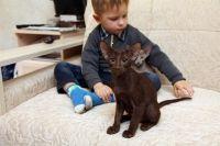 Orijentalne mačke i djeca