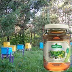 Характеристики лесного меда, его полезные и лечебные свойства, противопоказания