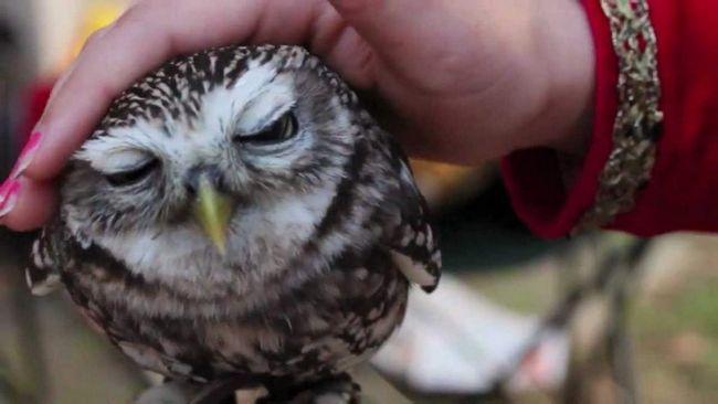 Хищные птицы в неволе