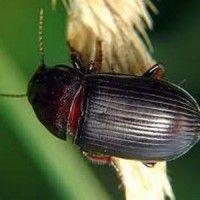 Vrste insekata