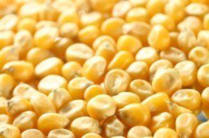 Силосное хранение удобно механизацией выгрузки и загрузки зерна