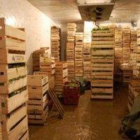 Хранение столовых корнеплодов
