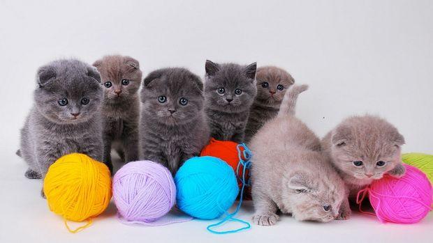 Игрушки для кошек своими руками: 20 идей для вашей кошки