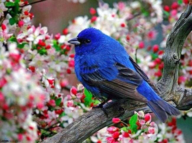 Koje ime dati svoje ptice.