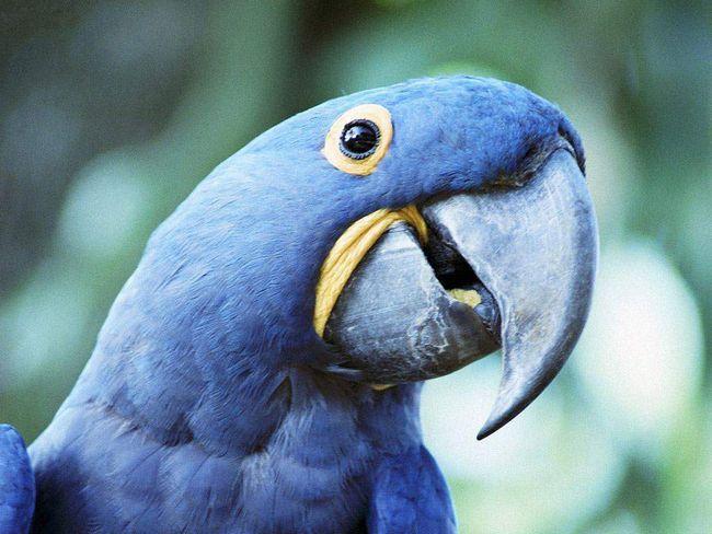 Ako vaš ptica je u stanju da govori, zatim odaberite ime za to više pažljivo.
