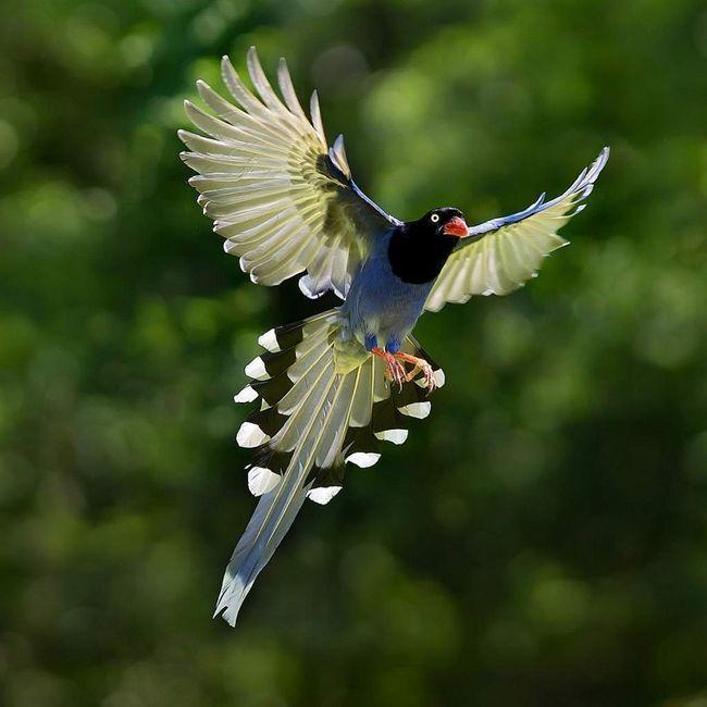 Za ptice postoje zvukove najviše ugodan ušima.