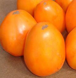 Sorte paradajza Orange King