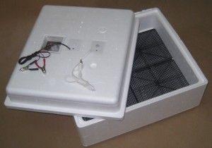 Inkubátor ideálny fotografie sliepky