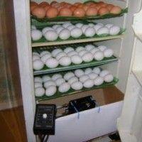 Инкубатор своими руками из холодильника | вдео | фото схема
