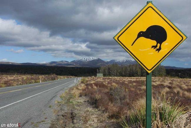 Так как киви не умеет летать, то передвигается пешком. Вот такие знаки предупреждают о возможном пересечении дороги этими птицами