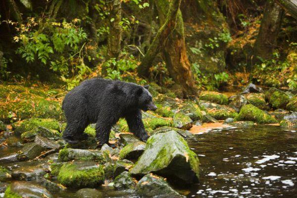 Во время спячки у медведей включаются мощные оздоровительные системы