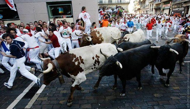 jedan od najupečatljivijih elemenata je upravo tradicionalne trke bikova kroz ulice paddocks grada San Domingo u koridi